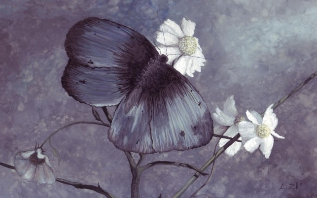 Random: Dark Butterfly & White Flowers