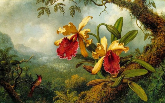 Beautiful Orchids Bird Jungle wallpapers and stock photos