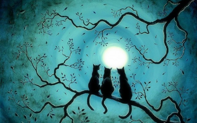 Three Black Kittys Blue Night wallpapers and stock photos