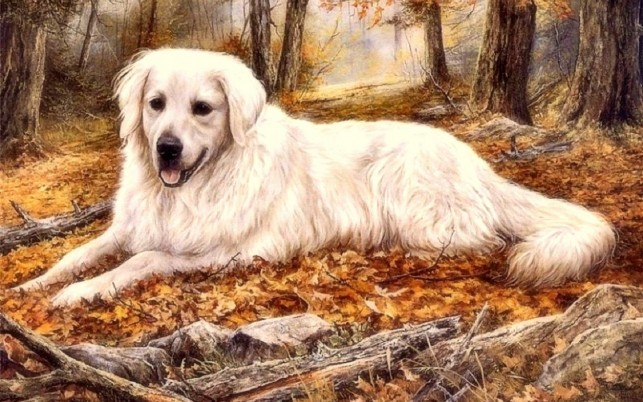 Lovely Autumn Dog wallpapers and stock photos