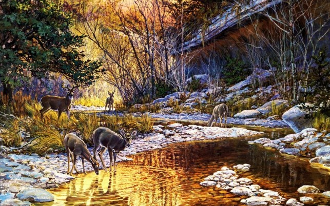 Forest Creek Deers Rocks House wallpapers and stock photos