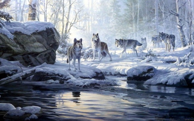 Winter Forest Wolves Creek wallpapers and stock photos
