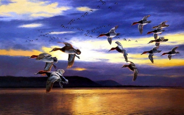 Migrating Birds Lake Sky Dawn wallpapers and stock photos