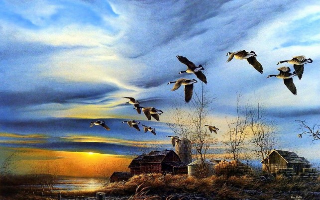 Farm Houses Lake Ducks Sunset wallpapers and stock photos