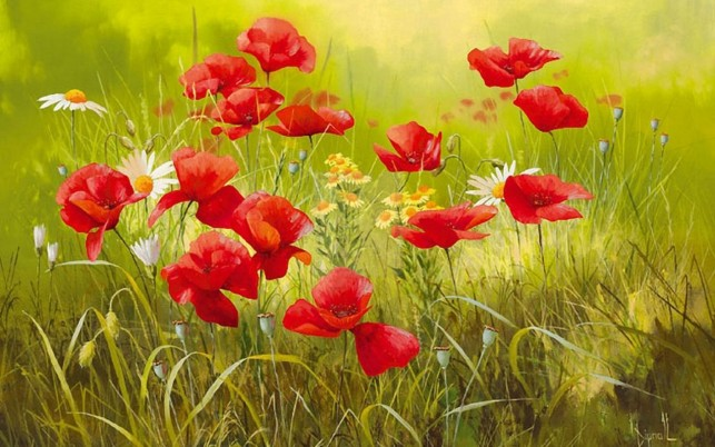 Pretty Red Flowers & Meadow wallpapers and stock photos