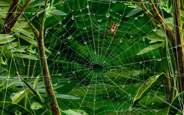 Spiderweb Spider Twigs Leaves wallpapers and stock photos