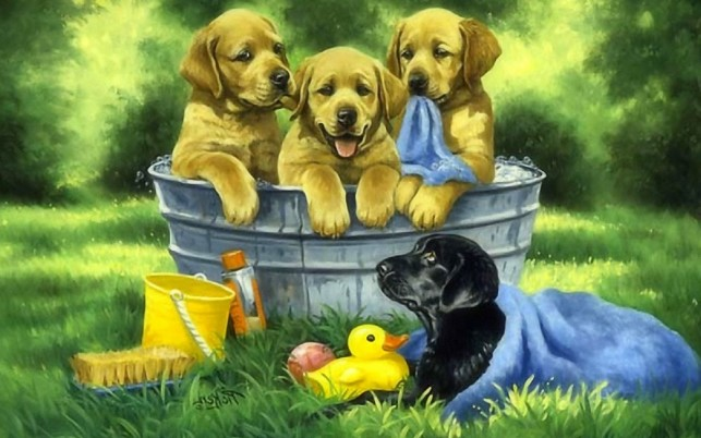 Cute Bathing Puppies wallpapers and stock photos