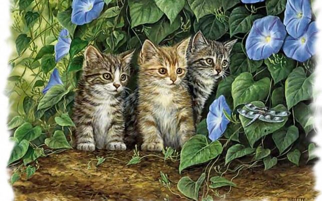 Cats Dragonfly Morning Glories wallpapers and stock photos