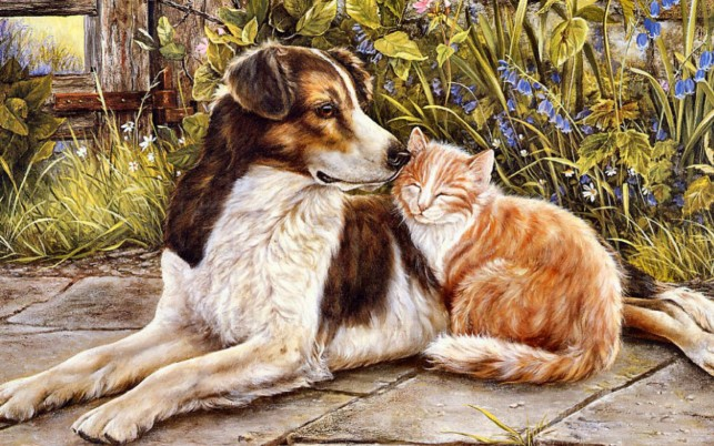 Dog & Cat Sweet Friendship wallpapers and stock photos