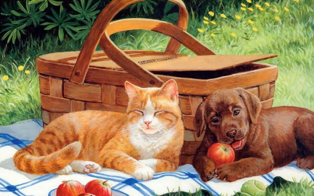 Cute Cat & Dog Picnic wallpapers and stock photos