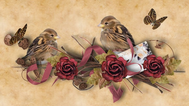 Birds Butterflys Roses Decor wallpapers and stock photos