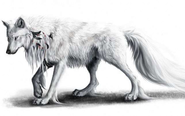 White Wolf & Black Feathers wallpapers and stock photos