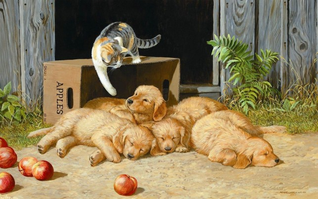 Next: Cute Puppies Cat & Apples