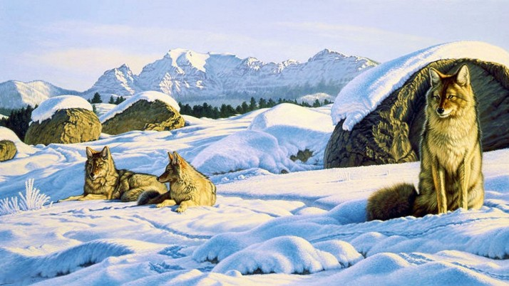 Mountains Wolves Rocks Winter wallpapers and stock photos