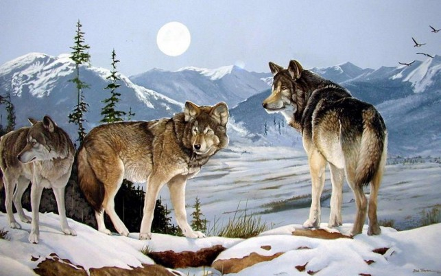 Three Wolves Peaks Winter Moon wallpapers and stock photos