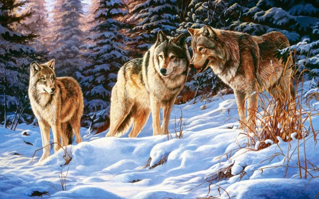 Winter Wood Wolves Small Talk wallpapers and stock photos