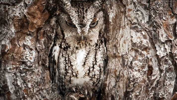 Previous: Camouflaged owl