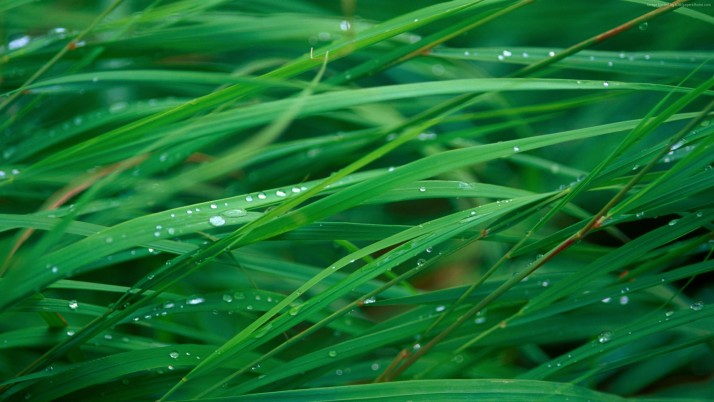 Water drops on grass wallpapers and stock photos