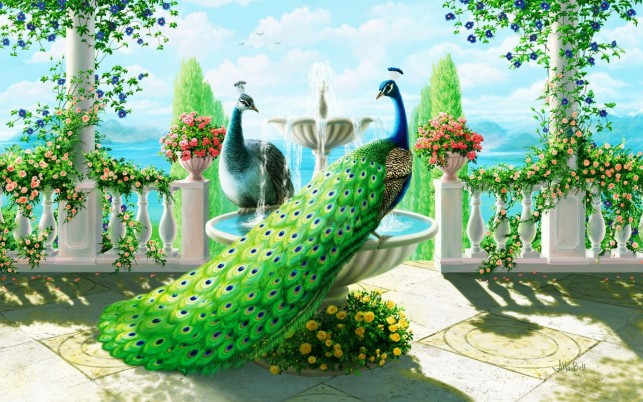 Splendid Peacocks Fountain wallpapers and stock photos