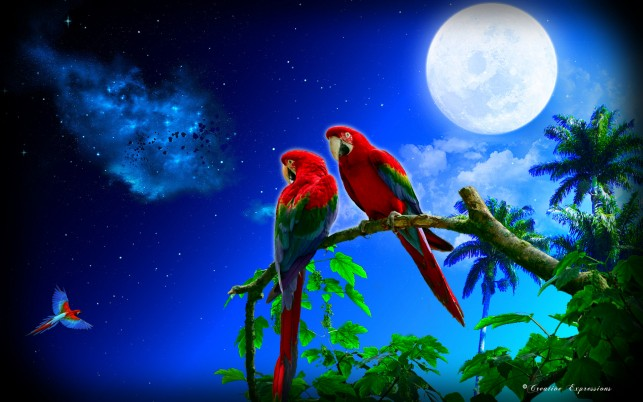 Parrots Couple Night Full Moon wallpapers and stock photos