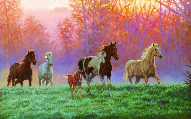 Horses Foal Meadow Morning Sun wallpapers and stock photos