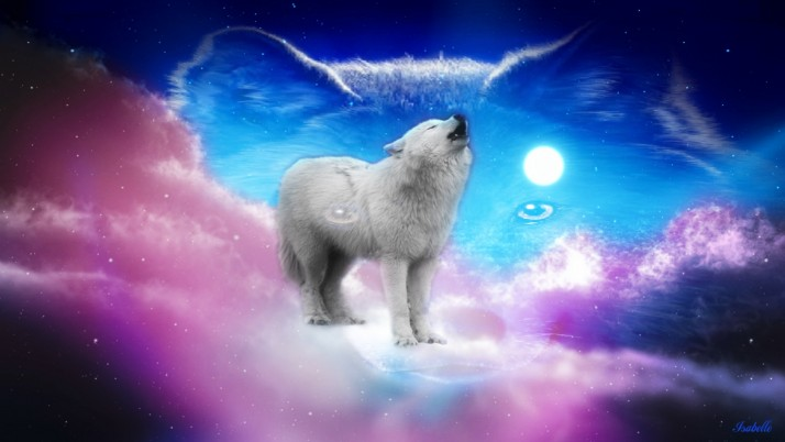 Cute Wolf Pink Sky Full Moon wallpapers and stock photos