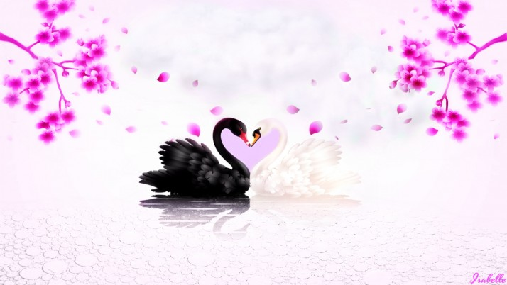 Swans In Love wallpapers and stock photos