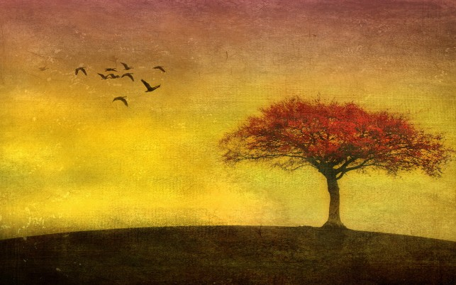 Red Tree Birds Yellow Sky wallpapers and stock photos