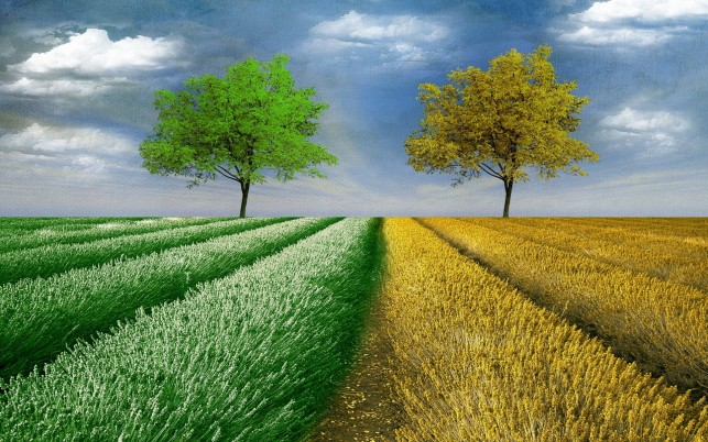 Green & Yellow Tree Fields Sky wallpapers and stock photos