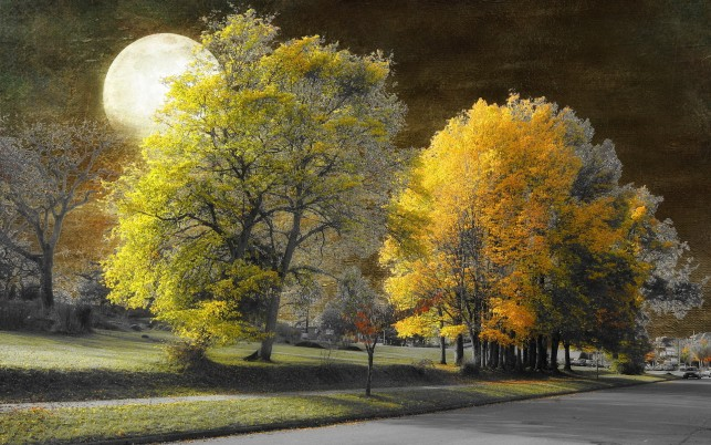 Previous: Autumn Trees Full Moon City