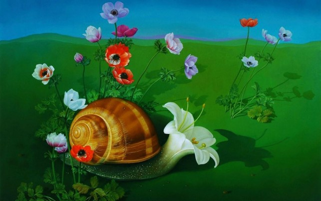 Snail Lily wallpapers and stock photos