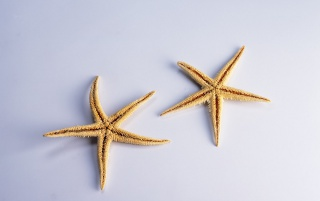 Star Shells wallpapers and stock photos