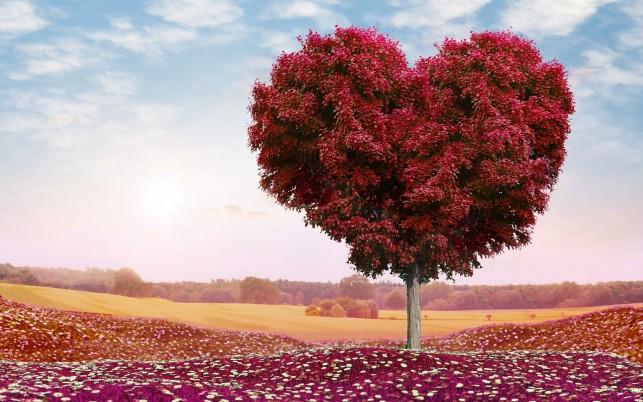 Beautiful Red Heart Tree wallpapers and stock photos