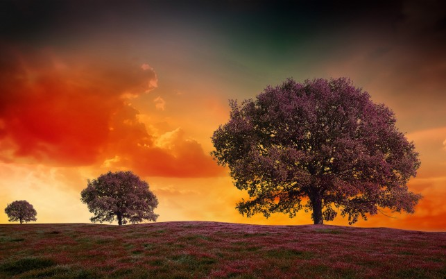 Purple Trees Meadow Orange Sky wallpapers and stock photos