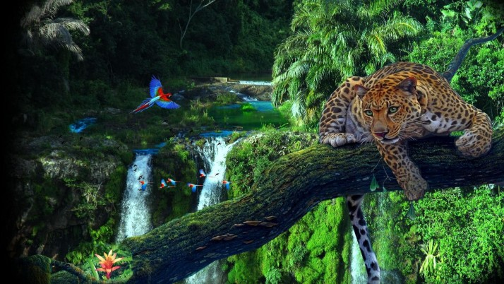Leopard Parrots Lovely Jungle wallpapers and stock photos