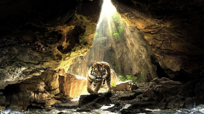 Cave Wild Tiger Water Light wallpapers and stock photos