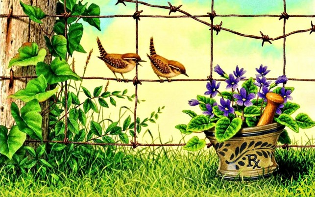 Grass Fence Birds Flower Pot wallpapers and stock photos