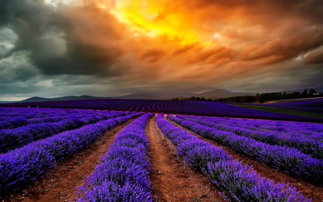 Purple Lavender & Stormy Cloud wallpapers and stock photos
