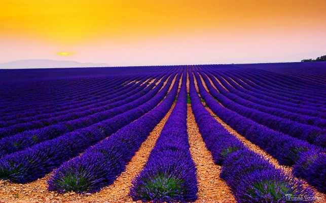 Purple Lavender & Orange Sky wallpapers and stock photos