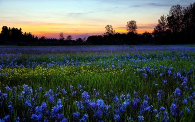 Blue Flowers & Black Forest wallpapers and stock photos