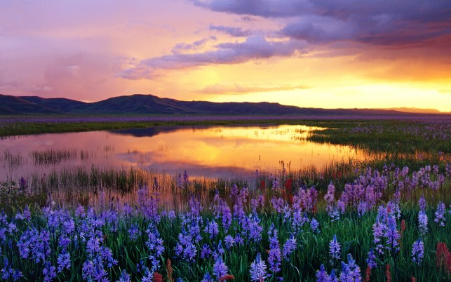 Lilac Flowers Swamp Sunset wallpapers and stock photos