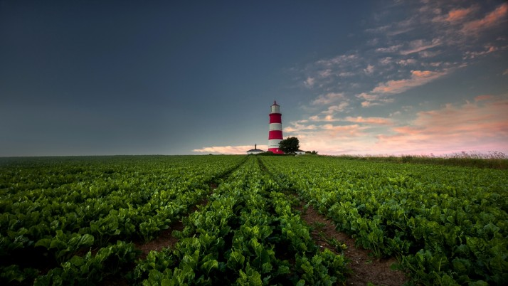 Lettuce Field & Light House wallpapers and stock photos