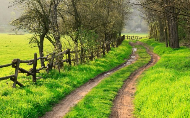 Fence Bright Grass Path Trees wallpapers and stock photos
