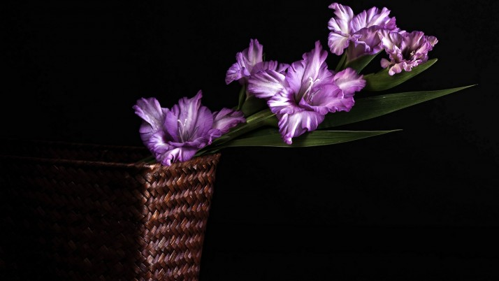 Purple Gladiolus wallpapers and stock photos