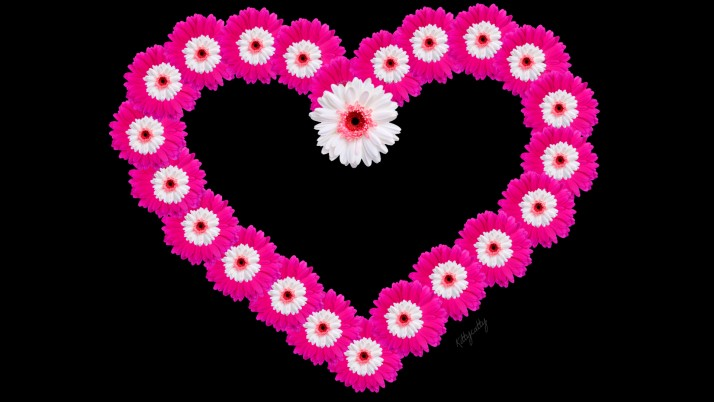 Pink Daisy Heart wallpapers and stock photos