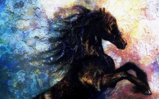 Arte de la pared bastante Caballo Negro wallpapers and stock photos