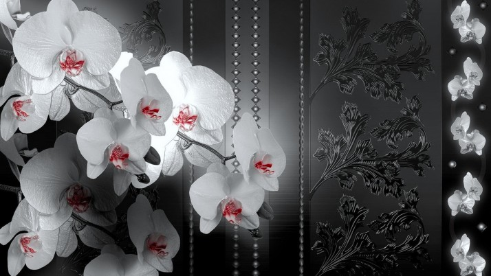 Elegant Orchids & Black Leaves wallpapers and stock photos