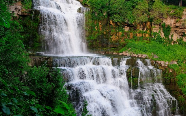 Splendid Waterfall Nice Plants wallpapers and stock photos