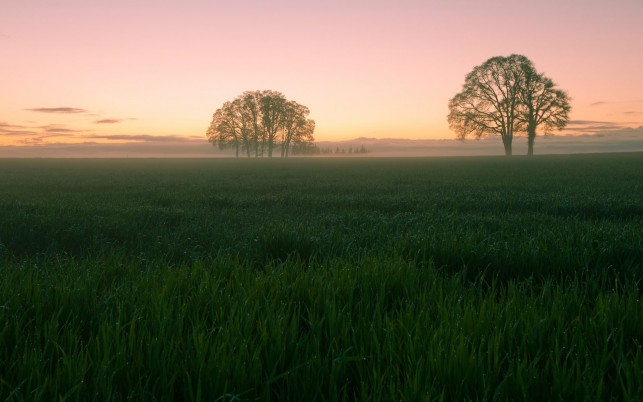 Dewy Pasture Trees Pink Dawn wallpapers and stock photos