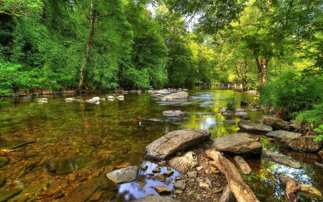 Clear River Trees Rocks Wood wallpapers and stock photos